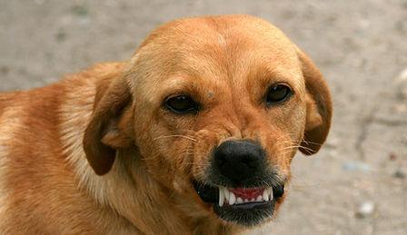 por qué muerde un perro