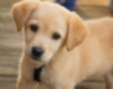 adiestramiento cachorros comunidad de madrid