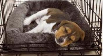 dónde debe dormir tu cachorro