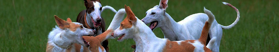 por qué tu perro se comporta con agresividad