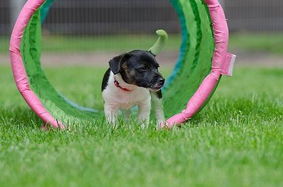 cómo enseñar a tu cachorro