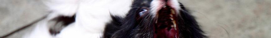 agresividad del perro