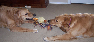 agresividad entre perros