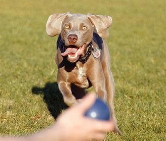 ejercicios para que juege tu perro