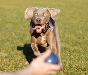 adiestramiento perros comunidad de madrid