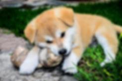 adiestramiento de cachoros en madrid