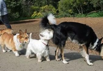 comunicación entre perros
