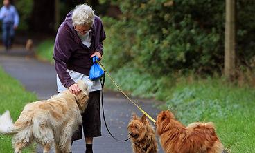 tu perro conociendo personas nuevas