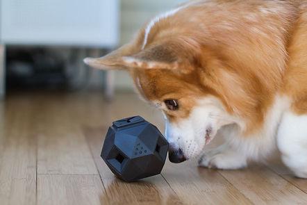 juegos para reducir la agresividad y el estrés de tu perro