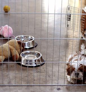 dar comida a un cachorro