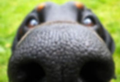 adiestramiento canino a domicilio madrid