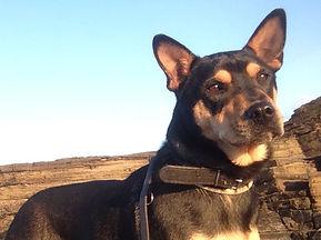 Liberadogs Adiestramiento Canino Madrid