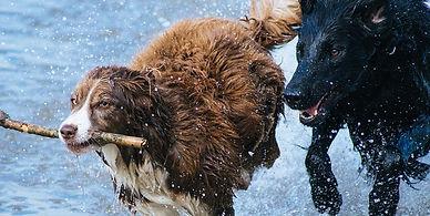 Tu perro debe jugar con otros perros