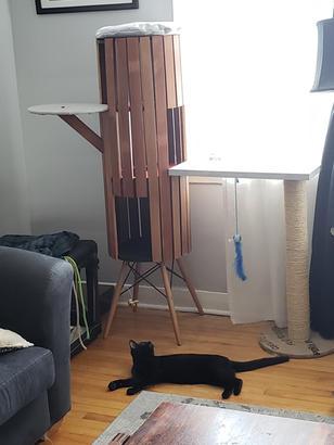 Cat Climbing Structure