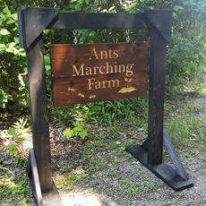 Marching Ants Road Sign