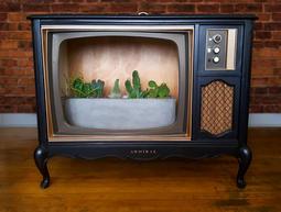 TV Terrarium
