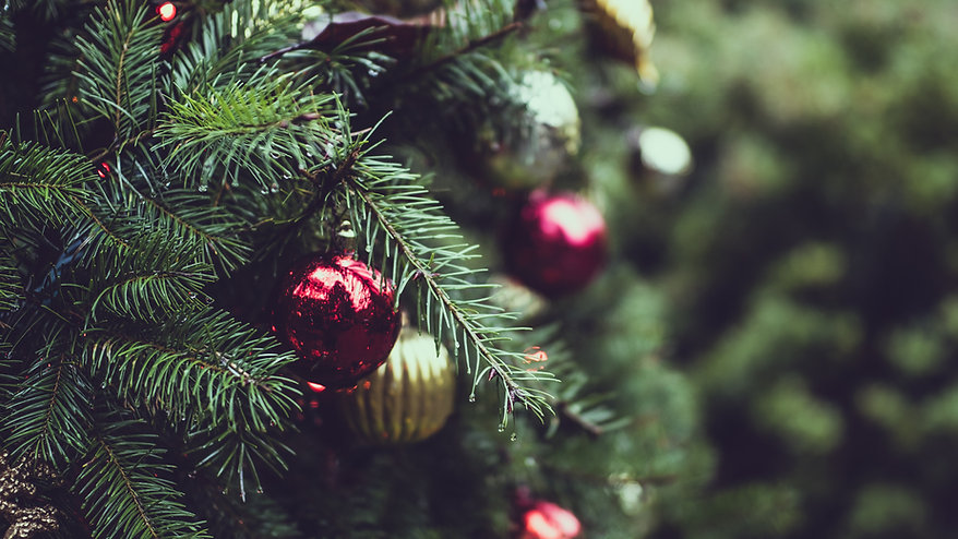 Christmas Tree Farm Photos.Timbuk Farms Granville Ohio United States