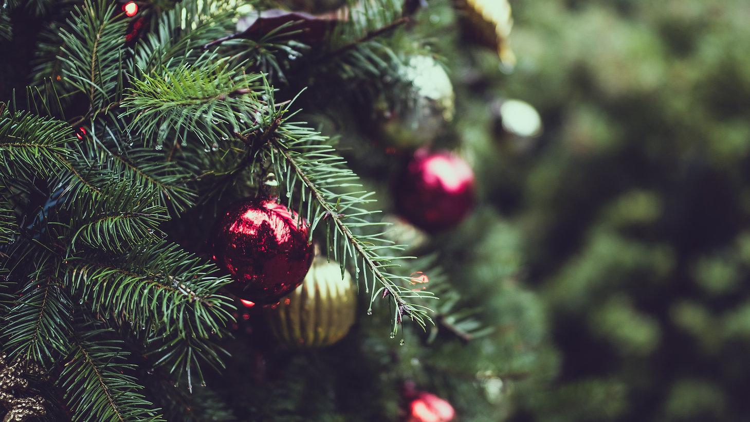 クリスマスパインツリー