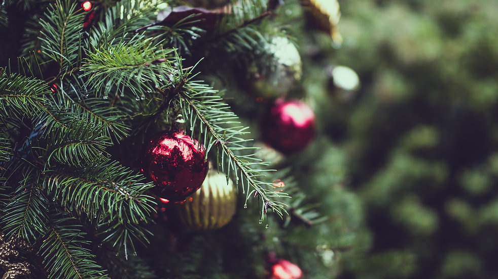 Christmas Pine Tree