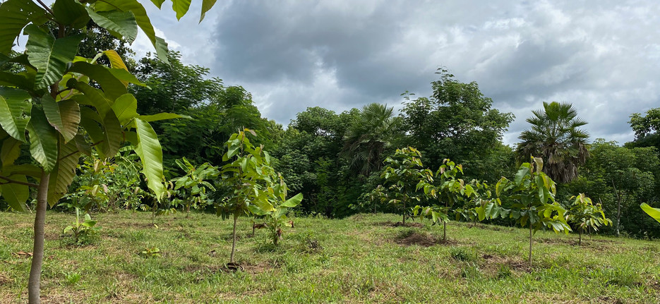 Native Trees