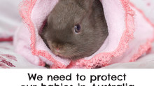 What is Rabbit Calicivirus in Australia and how do I protect my rabbit from it.