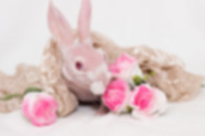Mr Bigglesworth the rabbit, bald rabbit, hairless rabbit, mr bigglesworth, mr bigglesworth the bunny