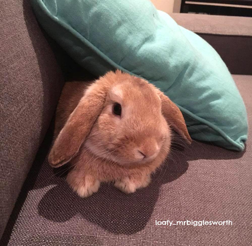 Gastro Intestinal Stasis in Rabbits