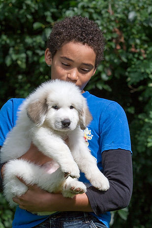 Teenager holding cute Great Pyrenees puppy