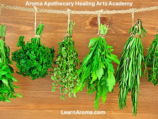 Uses of Medicinal Plants