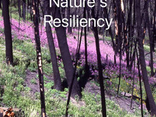 Nature's Resiliency