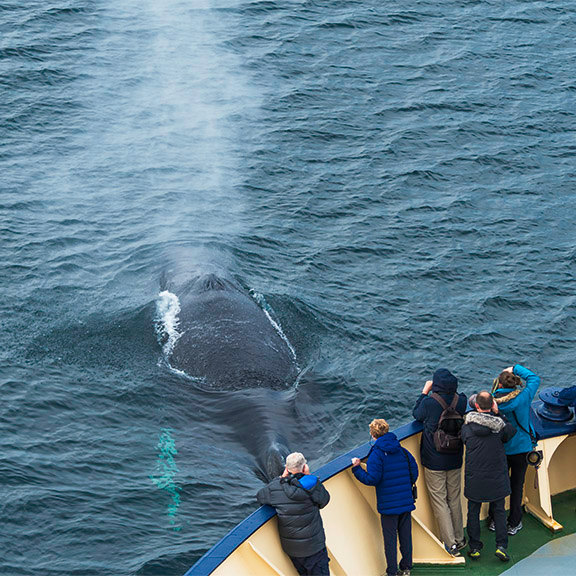 bowwhale.jpg