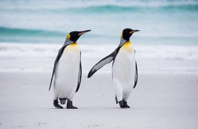 penguins-2.png