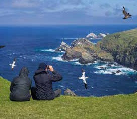 seabirds_edited.jpg