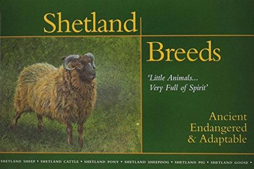 Shetland Breeds