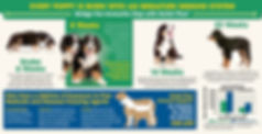 Nuvet%20Breeder%20Brochure48507_edited.j