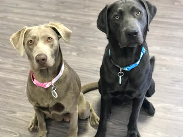 Atlas and Olive
