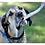Thumbnail: Organic Antler Chews For Dogs
