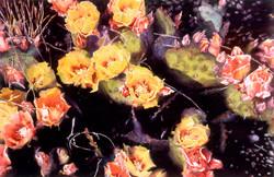 Prickly Pear Cactus Flowers II