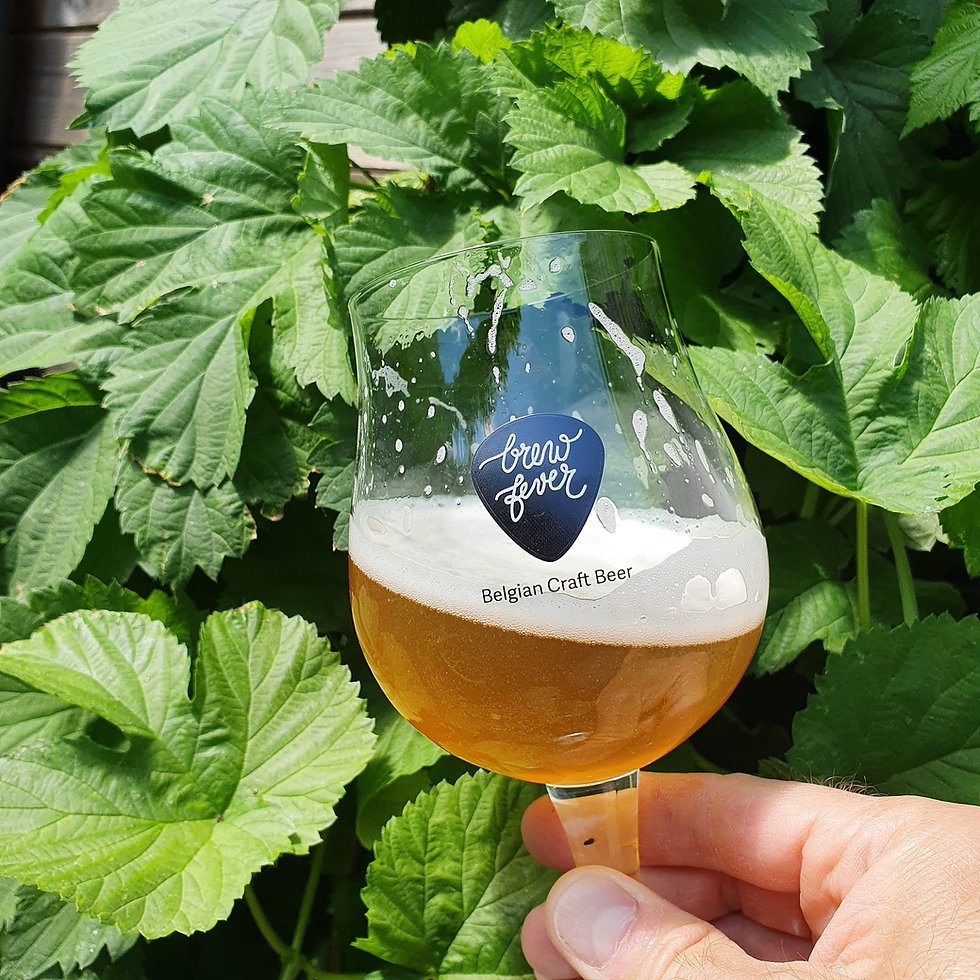BF glass with hop.jpg