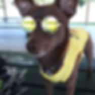"""Jesse Eden """"Scooby-Doo"""""""