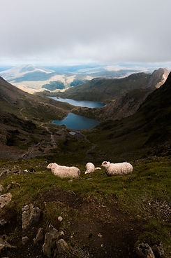 View from Mount Snowdon (Wales).jpg