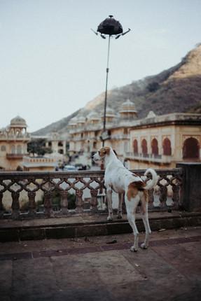 Indien - 16.jpg