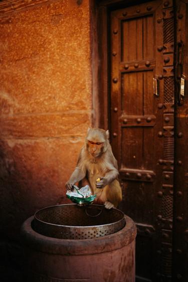 Indien - 9.jpg