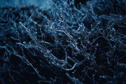 ICE - 136.jpg