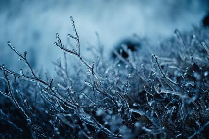 ICE - 137.jpg