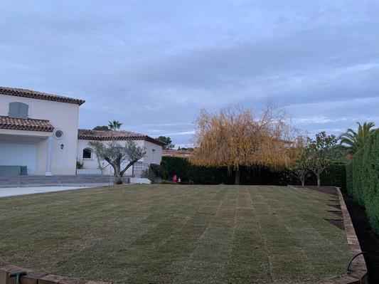 bernudas Grass