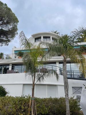 Plantation Syagrus Cannes