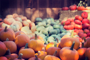 Best Places for a Fall Snohomish Wedding