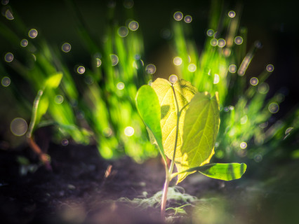 I Am A Plant. {Poem}