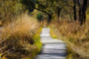 adventure-boardwalk-countryside-289327.j